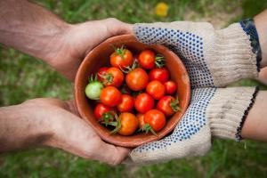 bowl of tomatoes cradled by to hands